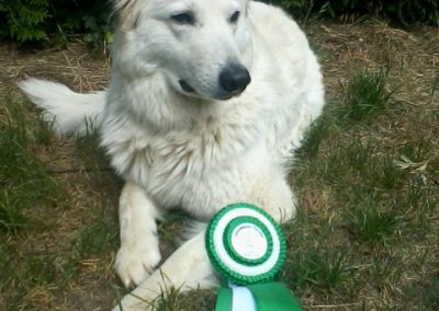 Askia 2. Platz Obedience Turnier Juni 2018