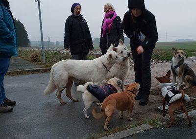 Alle Hunde warten auf ein Leckerli