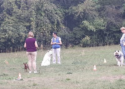 Training Junghundegruppe